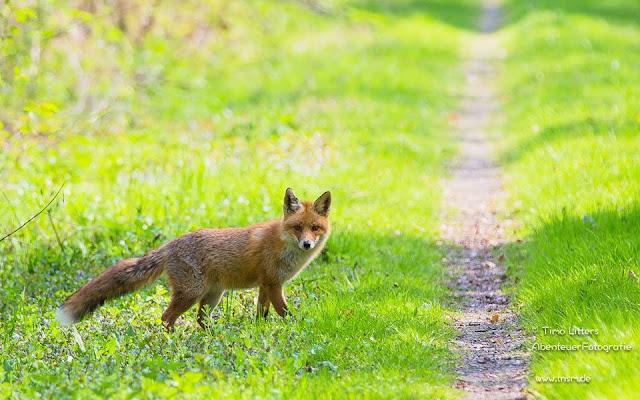"""Der erste Fuchs hat """"super Spaß"""" gemacht …."""