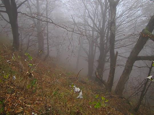 Stok opadający do doliny Pańskiego Zwiru.