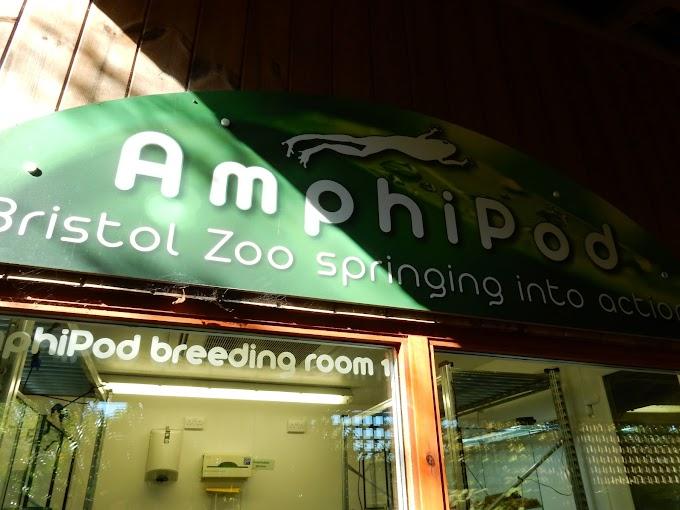Bristol Zoo Part II: Reptile House