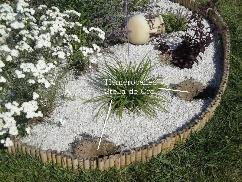 cocoon garden nettoyage du massif de rosiers. Black Bedroom Furniture Sets. Home Design Ideas