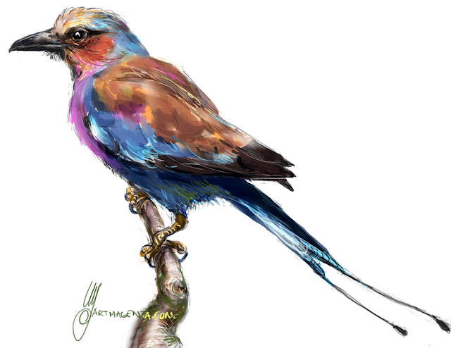 Lilac-breasted roller sketch painting. Bird art drawing by illustrator Artmagenta