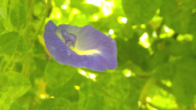 Beautiful Blue Flower Ever seen Photography |                FrOm's Photography
