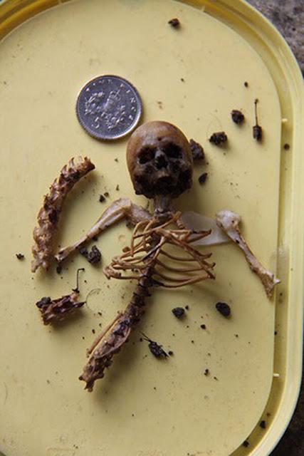 Se desconoce el paradero actual del esqueleto