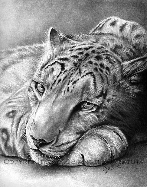 Snow Leopard Realistic Animal Drawings