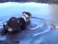 Bermain di Lumpur, Anjing Ini Diserang Makhluk dari Dalam Air