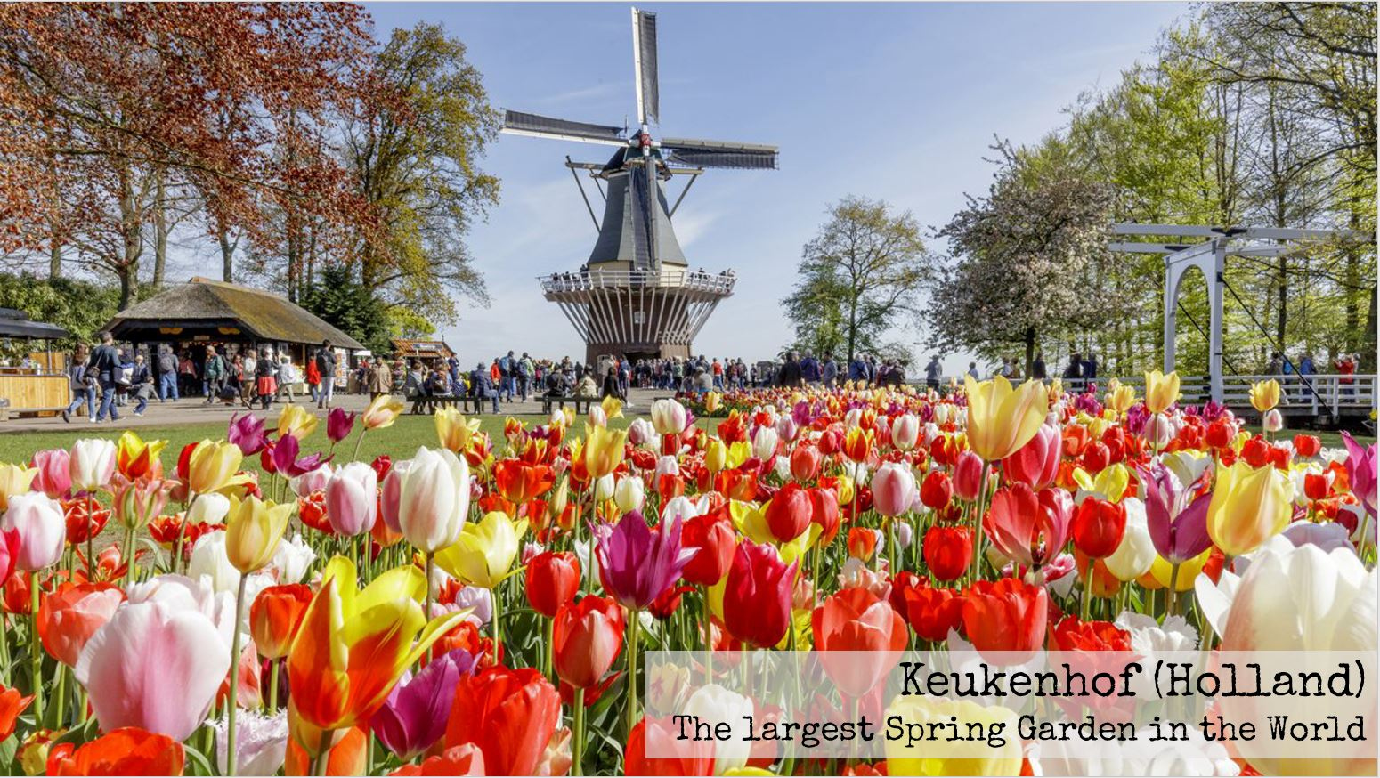 Have You Ever Dreamt Of Wandering Through The Colours And Fragrance Of Million Gorgeous Flowers Then Keukenhof Is The Perfect Place For You