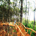 Wisata Jogja Hutan
