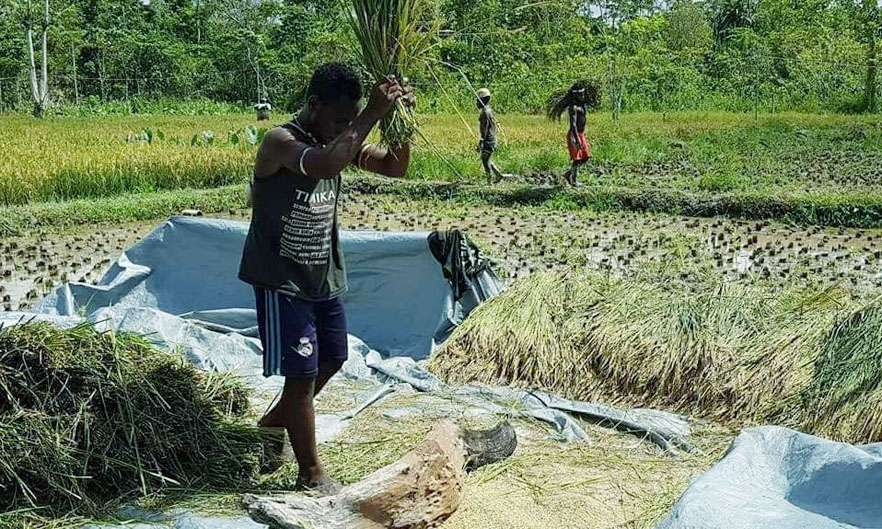 Pertanian Di Kampung Mulia Kencana Patut Menjadi Contoh Kampung Lain