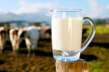Berbagai manfaat Susu Sapi Bagi Manusia  Berbagai Manfaat Susu Sapi Bagi Manusia