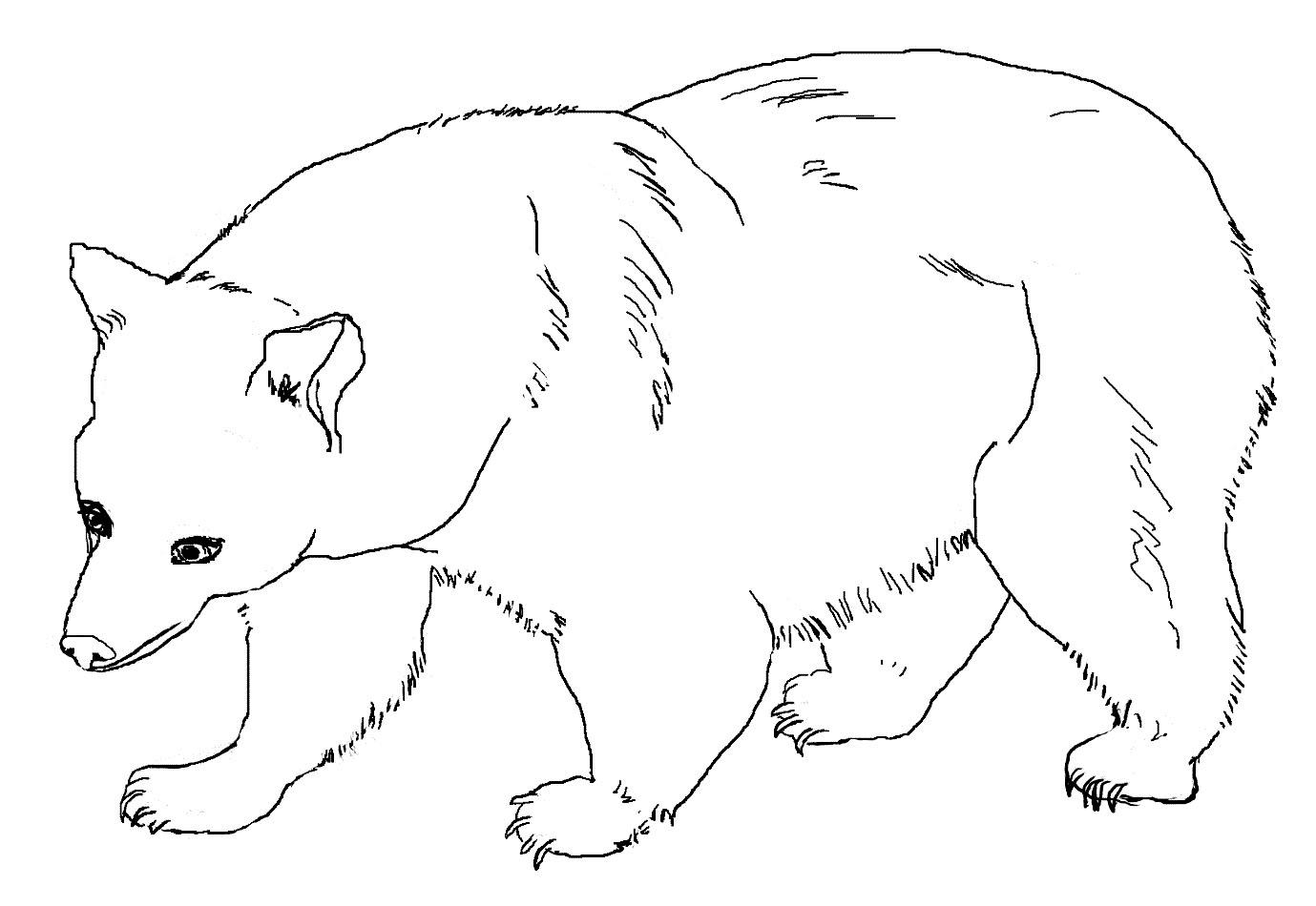 Gambar Mewarnai Beruang Untuk Anak PAUD dan TK
