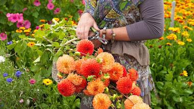 Crea tu jardín de flor de corte con bulbos de verano