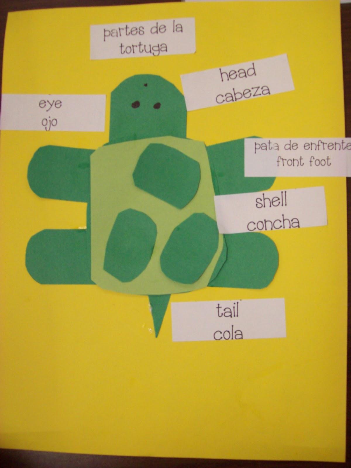 Chalk Talk A Kindergarten Blog Turtle Brace Map Lesson