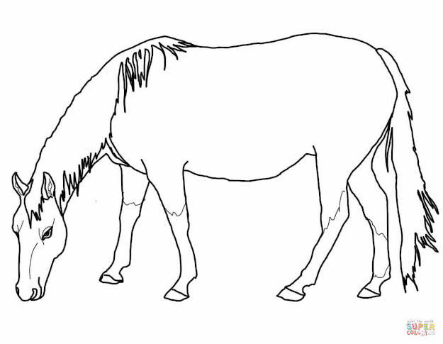 Top wild horse coloring pages pictures free coloring for Quarter horse coloring pages