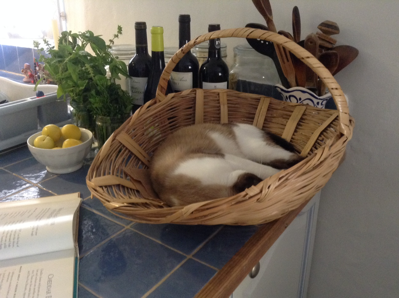 IN MY FRENCH HOUSE LIVES A FRENCH CAT