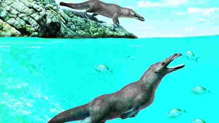 Encontraram os restos mortais de baleia quadrúpede 42,6 milhões anos