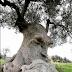 Замислене дерево