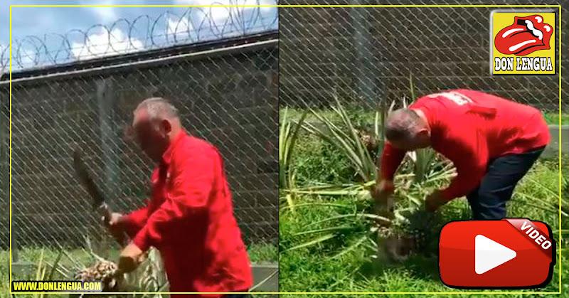 Diosdado Cabello en la Cárcel ? Cosechando mariguana? ah no.