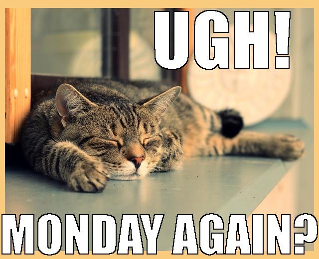 lazy cat Monday nap