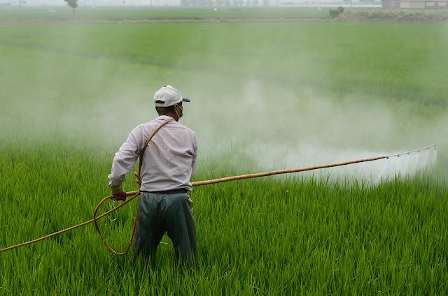 Fumigando plantas de arroz por Joan Carles López