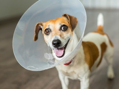 When should I neuter my dog?