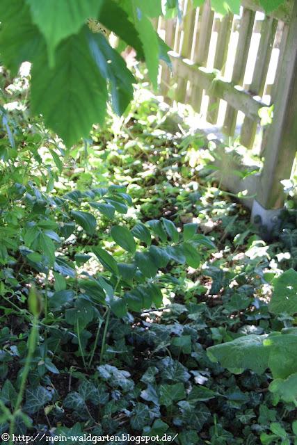 http://mein-waldgarten.blogspot.de/2016/06/warum-bodendecker-pflanzen.html