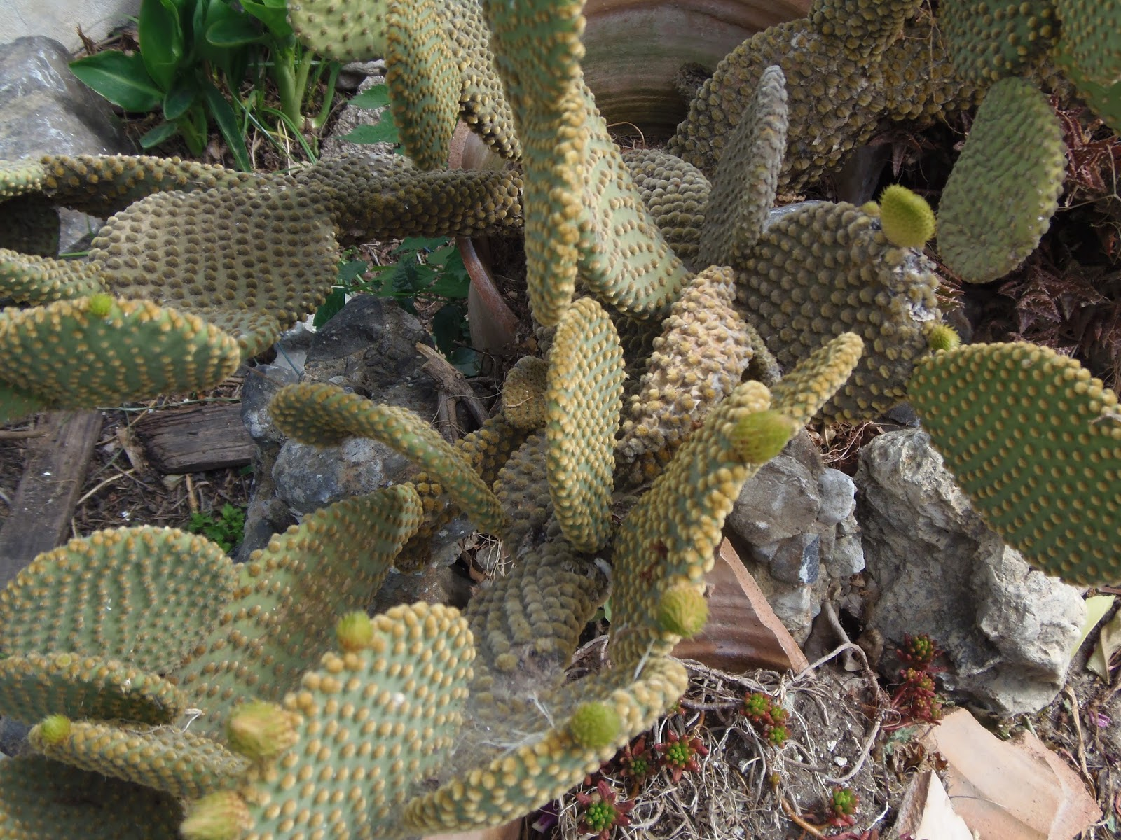 cactus, cacti, plant, travel, traveling, adventure, greece, crete, greek, island, jeep safari