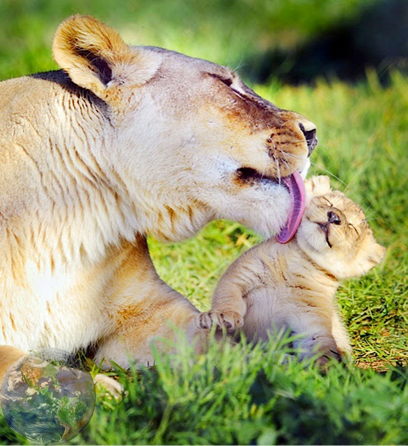 Mother's love is not just human feeling