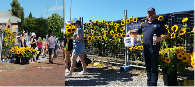 A collage of two photos. Left: the view down the street as one approaches the sunflower fundraiser. A bunch of yellow sunflowers are standing in black buckets. A mesh fence runs along the edge of the footpath with fundraising people standnig next to it as the general public walks by.  RIGHT: The mesh fence has sunflowers woven onto it. Leon Bignell stands in front wearing dark clothing. He is smiling and holding a white donation bucket in one hand and a water bottle in the other.