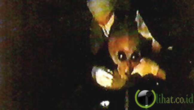 Video Alien Milik DNI