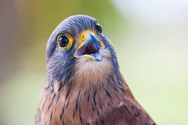 Closeup of beautiful blue bird