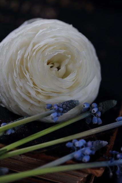 still life flowers, asetelma, jaloleinikki, helmililja