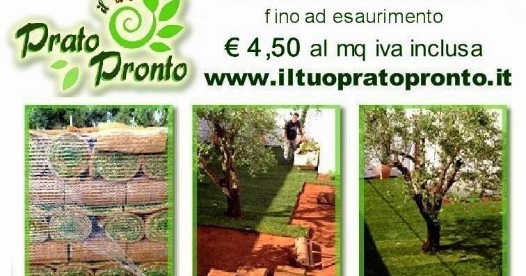 Il tuo Prato Pronto - Vendita on line: OFFERTA PRATO A ROTOLI