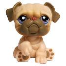 Littlest Pet Shop Pet Pairs Bulldog (#135) Pet