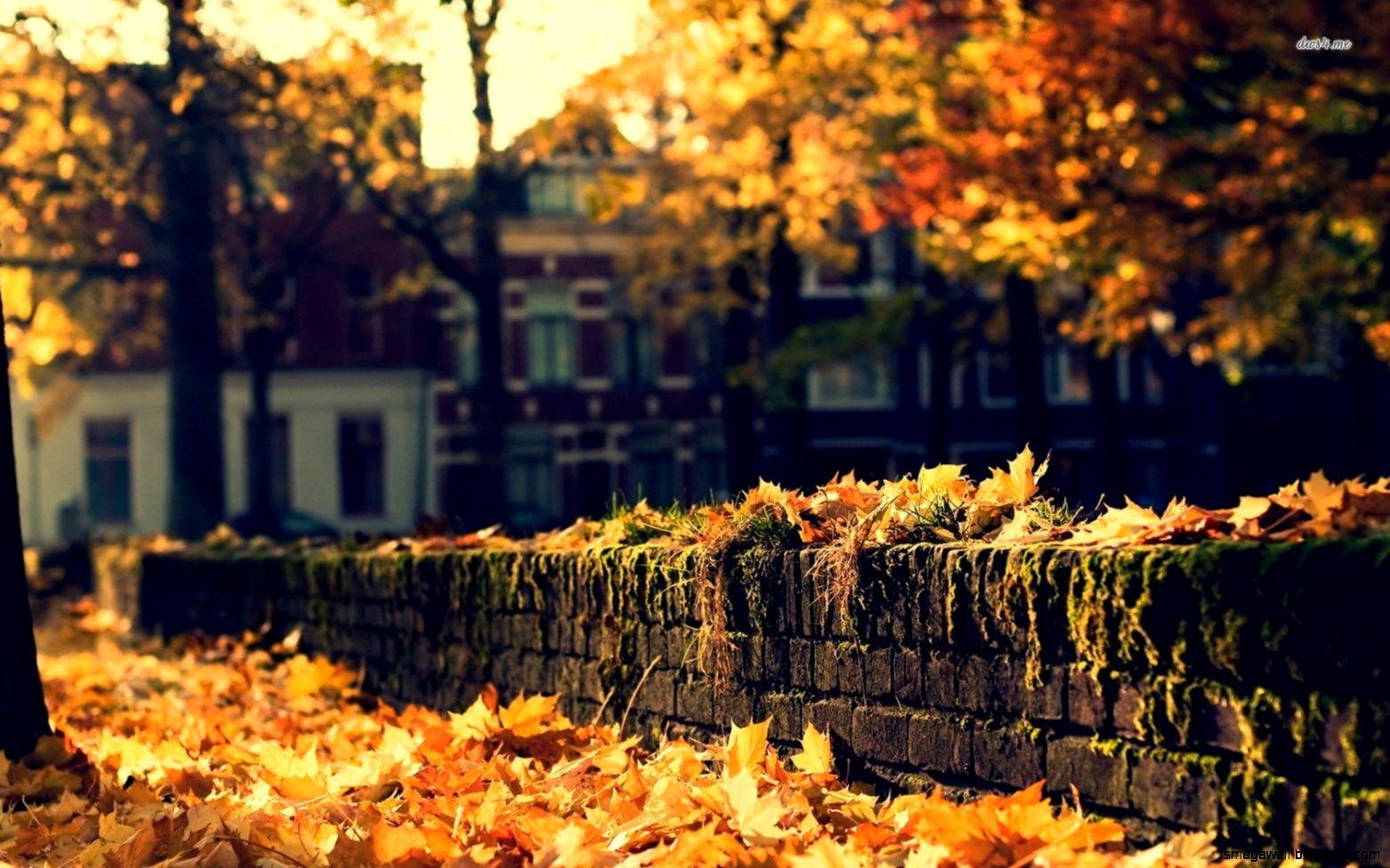 Autumn Street Wallpaper Mega Wallpapers