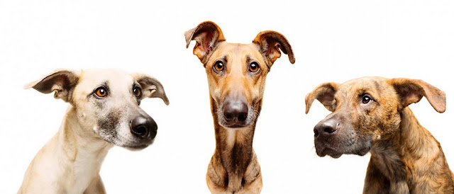 Elke Vogelsang, All the good dogs, fotografía, photography, dogs, perros