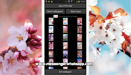 Bonitos fondos de Cherry Blossom for WhatsApp