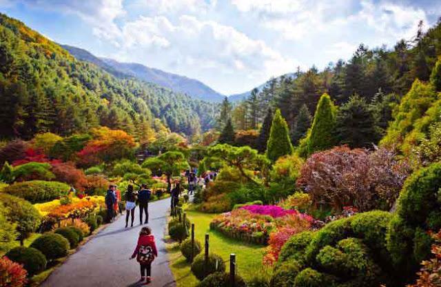 Vườn Morning Calm - Vẻ Đẹp Khó Quên