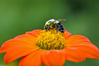 Image result for bees and butterflies at Rotary Botanical Gardens