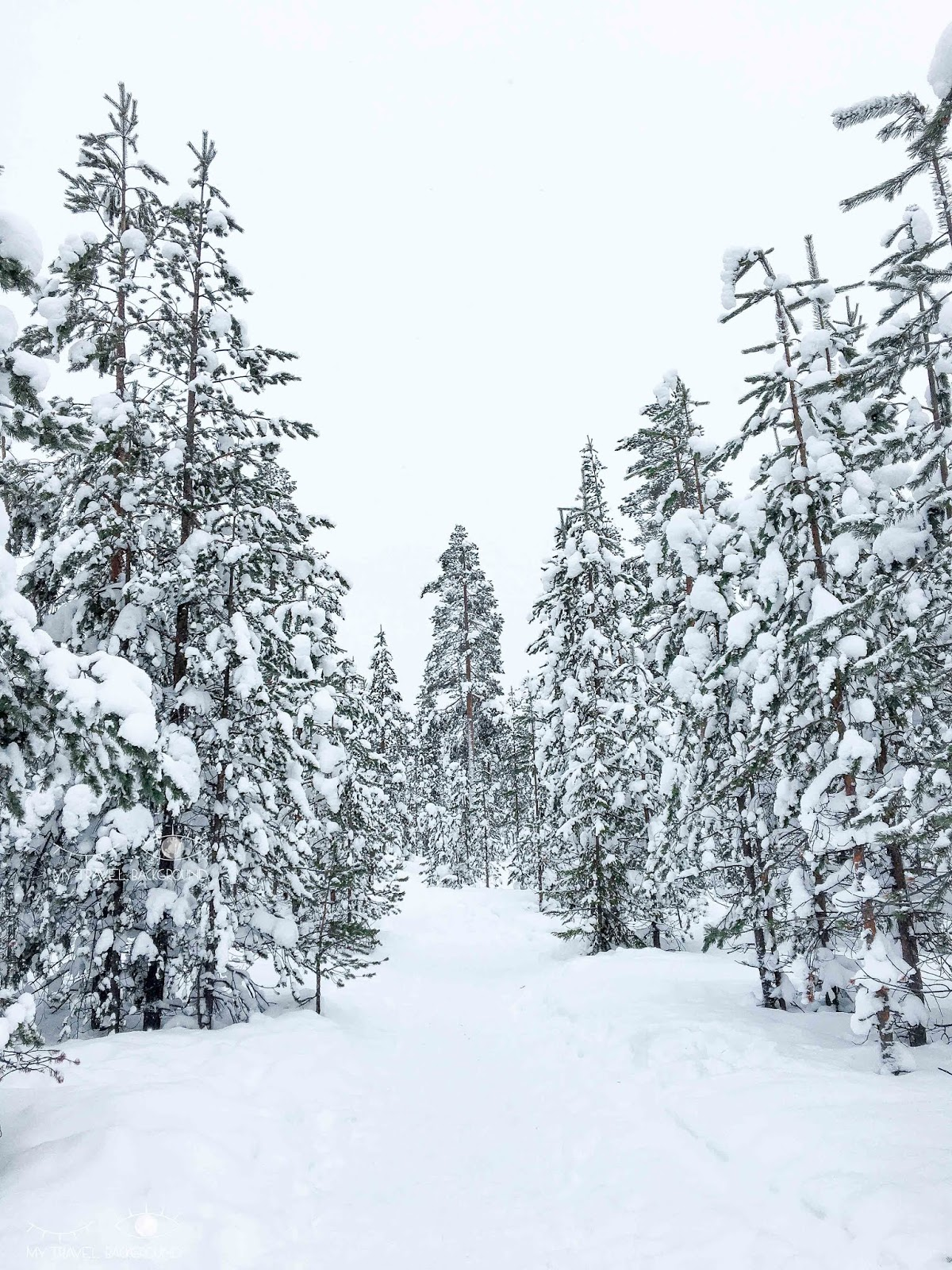 My Travel Background : Que faire à Rovaniemi en Laponie ? Foret boreale