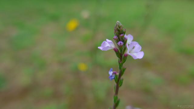 Macro fotografia di fiore viola