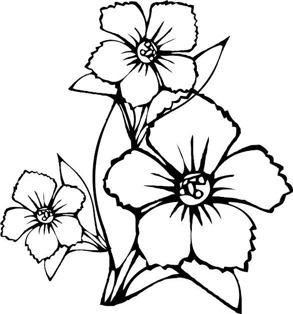 Coloring Pictures Of Flowers New