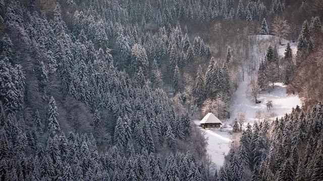 Black Forest images