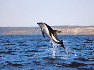 Fotografia de delfin sobre el mar