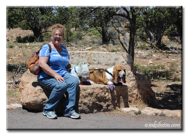 Basset hound & Westie sitting on huge rock bench with M. K. Clinton at the Grand Canyon