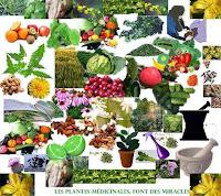 Que peuvent les plantes médicinales