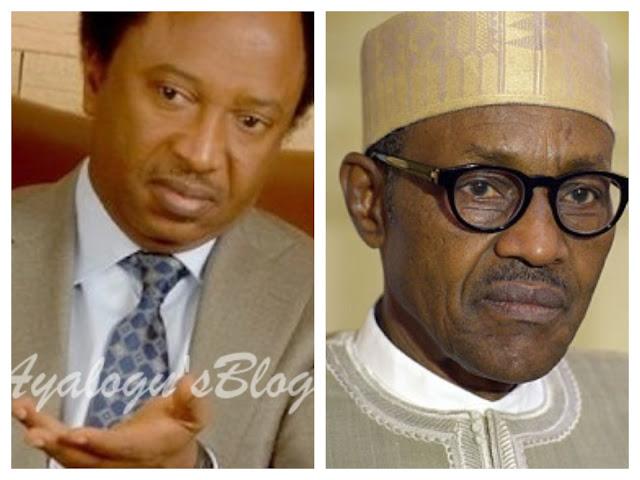 Why President Buhari Must Resign Now - Shehu Sani Blows Hot