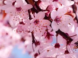 Curiosa Tempora Femmes Et Fleurs 3 Japon Amoureux