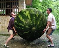 Lustige Männer im Garten - riesige Melone ernten - Ulkige Bilder