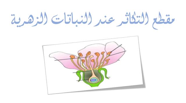 تحميل 4 مذكرات حول التكاثر عند النباتات الزهرية للجيل الثاني