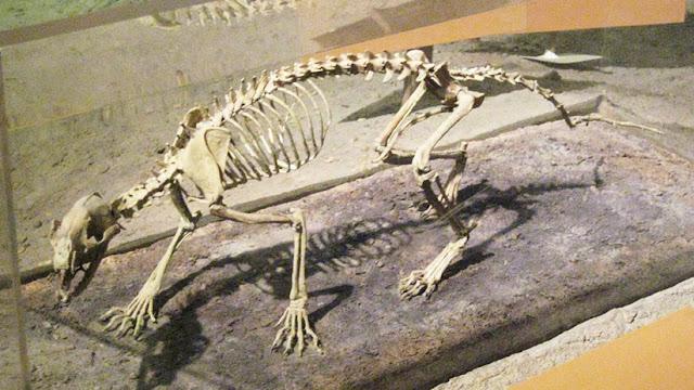 Científicos descubren cómo cazaban los primeros perros hace 40 millones de años